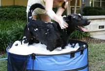 Dog Bathing Tubs  ♣ ActiveDogToys / You'll be amazed at how much easier it is giving a Fido a bath with these made-especially-for-dogs bathtubs. Never again will you run around the backyard chasing after your dog with a spray house or try unsuccessfully to get your dog inside your bathtub. Hooray!