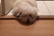 My dog Koby