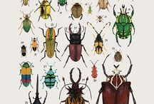 Beetle collections / Beetles collected together