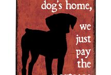 All for the Pets / Wonderful home accessories for your favorite furry friends! / by KB Home