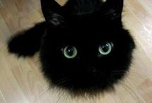 Kitties,Kitties & more Kitties / Lots are black because I heart black cats (RIP Hakeem, he was a good cat) / by Susan Stonehocker