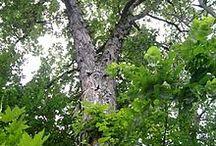 Tree's / Tree's we know