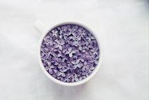 Lilac | Halvány lila | Lila