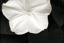 Chiaroscuro (black + white)