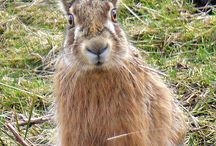 Hares & Rabbits❤