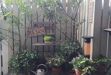 Dooryard hints