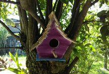 Casas de Pássaros.