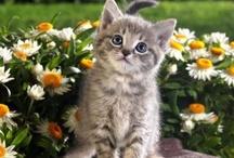 Flori si animale