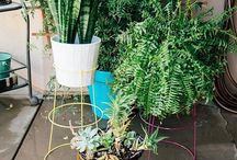 Plant Stands from Tomato cages