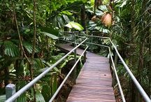 Daintree Rainforest / The Daintree Rainforest offers a world of natural wonders
