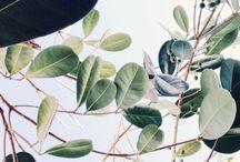 Leaf/plant
