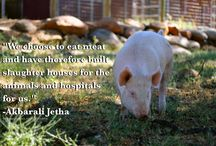 Animal Rights - Vegan Thoughts / by Rebecca Symon