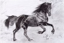 Black & White Drawings / Black & White Drawings by Karolina Gassner (karogfineart); pencil drawings
