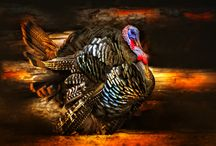 Thanksgiving / by Adeline Nobel