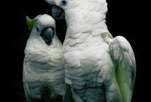 Πουλιάκιλο