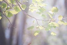 Spring /   / by Wisuella