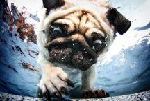 Pug Photography / Pet photography to adore, draw ideas from including dog poses and more.