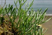 Foraging ~ sea ~ forests