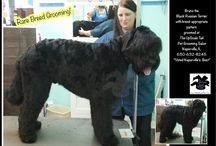 Black Russian Terrier Grooming / We groom rare breeds