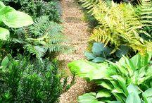 garden/ veggie