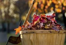 HÖST ♡ autumn