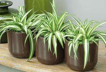 plantes intérieur detox