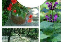 flowers / flower beds