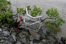 Secret life of shopping trolleys