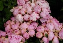 Flowers...peonies