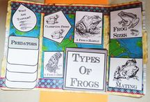 Frogs Unit of Study