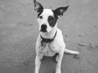 Pet Photography / Pet portaits