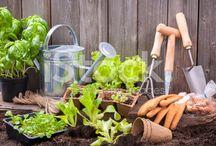 istock - gardening
