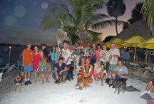 Sarasota Dog Meetup / Socializing our dogs and our people!