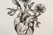 Anstomisk hjerte