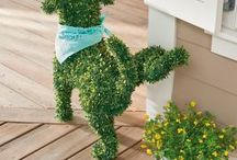 Dog peeing plant