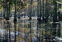 South Carolina....No Place Like Home / by Abby W Todd