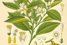 Botanica Ilustraciones