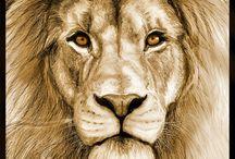 Löwen Tattoos / Die schönsten Motive für LöwenTattoos