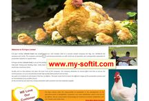 Agro Website design company in bangladesh