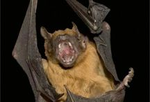 Batpants! / by smilingmonster