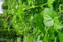 Ulubiona pora - wiosna / Wiosna przyłapana na gorącym uczynku, w sadzie, lesie....