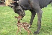 Fotografia con animali