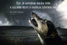 arany-kutya