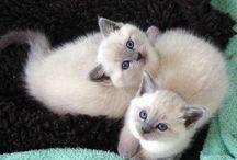 Cats,i love!!!!