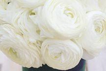 Flores !!