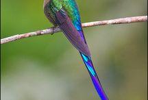 Hummingbirds/Observatorio de Colibríes