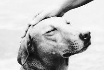 Pensieri sui Cani