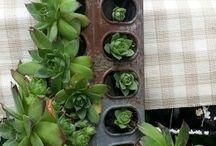 Interior Landscape Inspiration / We love using plants indoors!