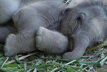 Baby Animals / Miksi? No siksi, että näistä tulee niin hyvä mieli <3<3<3<3