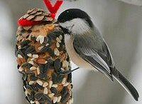 Lintujen ruokinta-ideoita